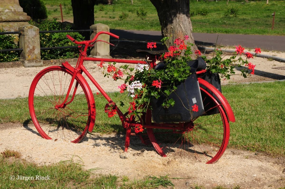 Rotes altes Rad mit Geranien in den Packtaschen