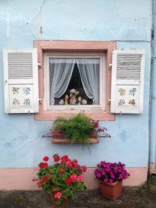 Ein quadratisches Fenster mit aufgeklappten hölzernen weißen Fensterläden, zierlich gehängter Gardine und Blumenschmuck in Geranienkästen