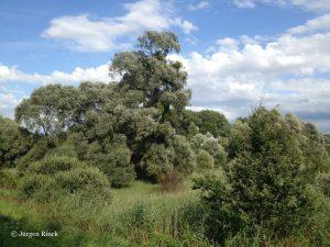 Grüne Wildnis unter blauem Himmel mit weißen Wolken